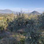 Dalla città alla campagna: storie di permacultura